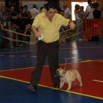 Bulldog frances lonado Fozzy en exposicion
