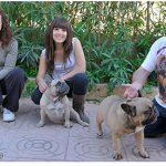La Familia de Rosa Dorada Bulldog frances en villamarchante- Valencia