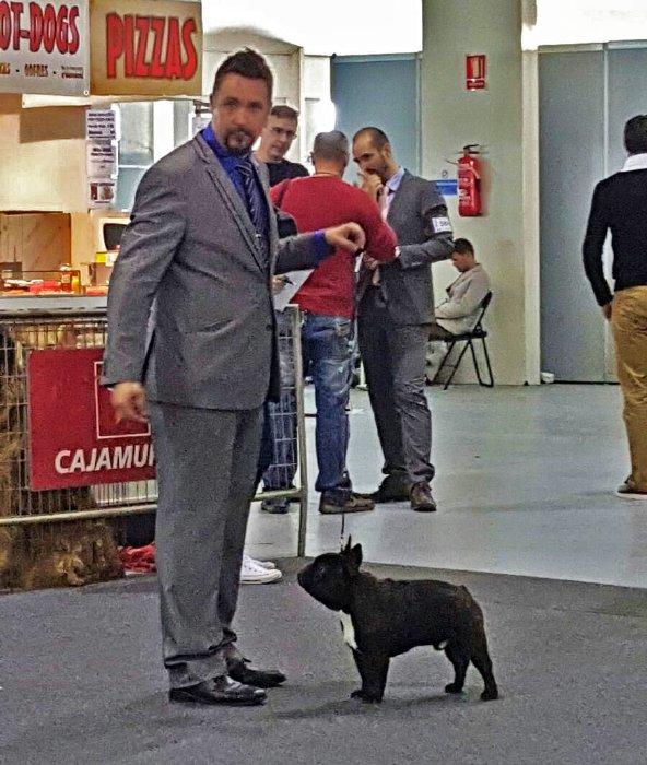 Compenetracion maxima del handler y el macho bulldog frances Romeo