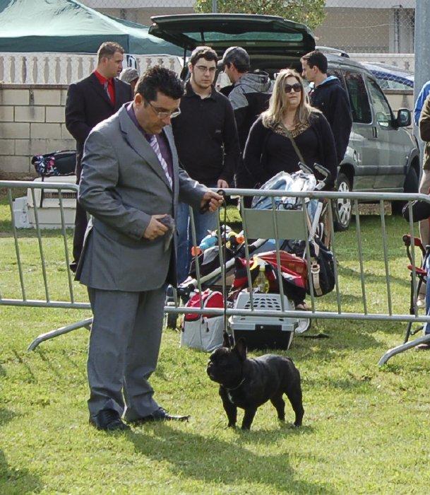 Macho de bulldog frances negro Vuitton de petit drac 3