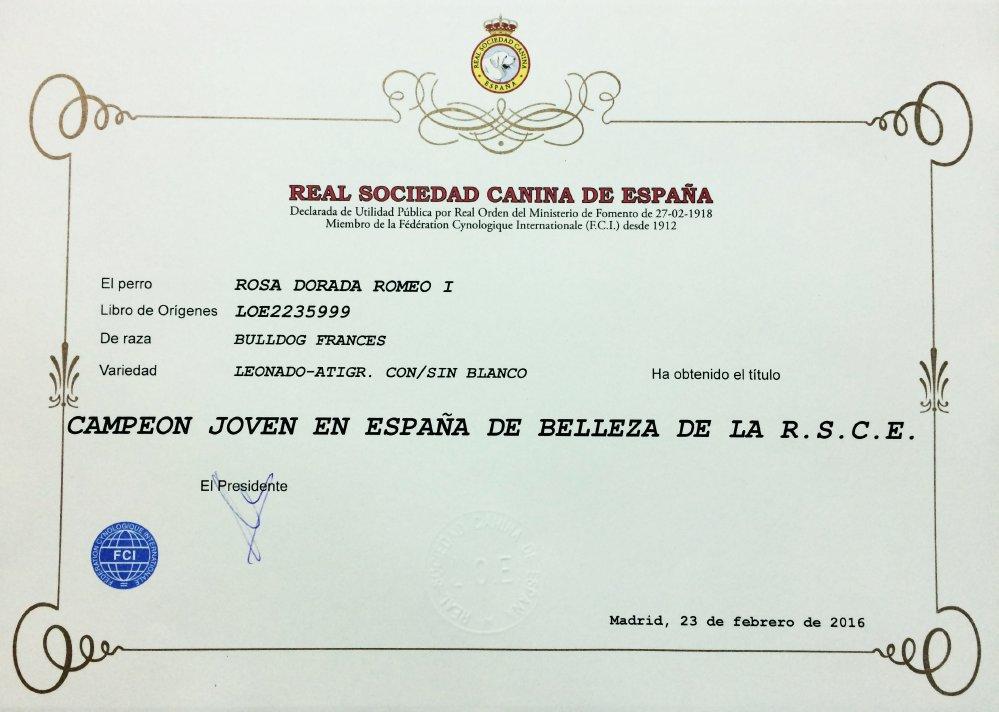 Titulo de Campeon de españa de nuestro macho de bulldog frances Rosa Dorada Romeo