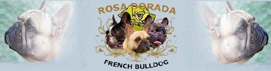 Criadores de Bulldog Frances