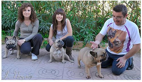 La Familia de Rosa Dorada Bulldog frances en villamarchante Valencia