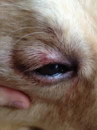 ojo rojo por rascarse